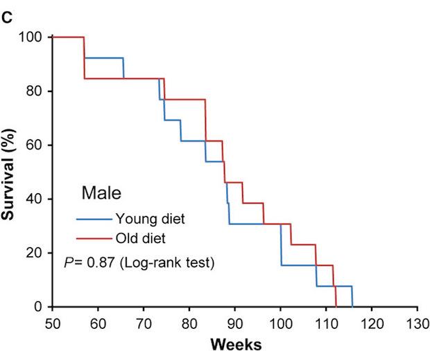 Выживаемость самцов мышей на «молодой» (синяя линия) и «старой» (красная линия) диетах