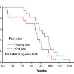 Выживаемость самок мышей на «молодой» (синяя линия) и «старой» (красная линия) диетах